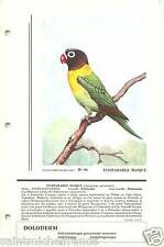 Inséparable masqué Agapornis personatus Yellow-collared Lovebird FICHE CARD 50s