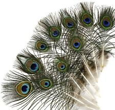 "50 Pcs MINI PEACOCK Natural 4-10"" EYE Feathers; Bridal/Trim/Halloween/Costume"