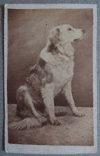 Photo Carte de Visite Cdv Chien Dog Animal Vers 1860