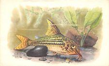 B27596 Poissons Fish Rusia
