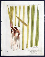 1800 VIETZ ICONES PLANT. Acorus Vulgaris - Kalmus - Cal