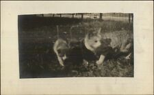 Kitty Cats Kittens - Amateur Real Photo Postcard c1910