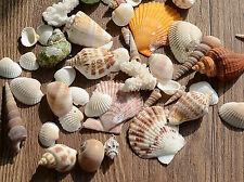 Approx 100g Beach Mixed SeaShells Mix Sea Shells Craft SeaShells Aquarium S