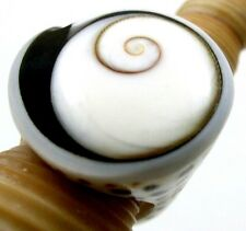 STUNNING SHIVA EYE CONE SHELL RING, size US 8 : GA291-A