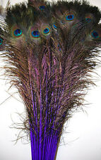 "100 Pcs DYED PEACOCK Feathers 30-35"" PURPLE ; Halloween/Costume/Bridal/Burlesque"