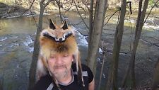 Red fox fur mountain man hat pelt hide hats mens * womans beaver coyote wolf