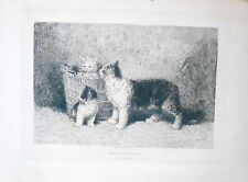 """Louis Eugène Lambert -  Chat - """"Dans la Corbeille"""" - Eau Forte Originale XIXème"""