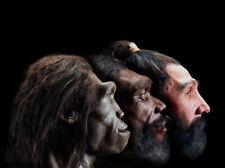 Framed Print - The Evolution of Man (Picture Poster Humans Homosapien Art)