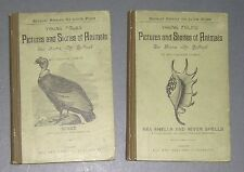 YOUNG FOLKS Pictures Stories of Animals Sanborn Tenney Birds & Sea River Shells