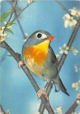 B27557 Birds Oiseaux Italy