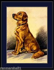 English Picture Print Golden Retriever Dog Art