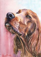 Setter watercolor Print of the Original Watercolor Painting art red irish