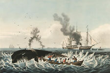 Images of American Whaling Art: The Whale Fishery, c.1850  - Fine Art Print