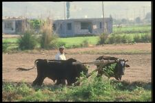 047160 Farmer Near Gazipasa A4 Photo Print