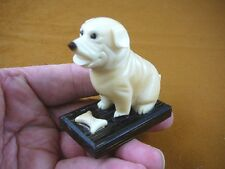 (tn-dog-635) wrinkly good DOG puppy TAGUA NUT Figurine Carving Vegetable dogs