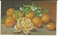 Oranges and Blossoms in Sunshine State Florida Flower Still Art Postcard