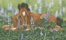 """""""Lounging in the Lupines"""" Judy Larson Fine Art Giclee Canvas"""