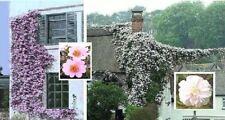 Wildrosen Sortiment / Pflanzen für den Topf Balkonpflanze Blumenampel winterhart