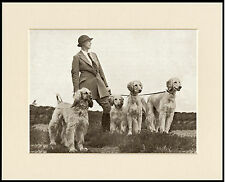 AFGHAN HOUND LADY AND HER DOGS LOVELY OLD IMAGE ON DOG PRINT READY TO FRAME