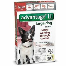 Bayer Advantage II Large For Dogs 21 - 55 lbs. lb