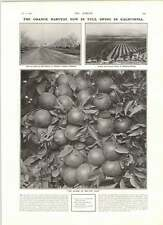 1906 Almond Trees Oranges Lemons Arlington Heights Radium Rontgen Rays