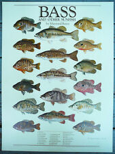 Vintage 1982 Maynard Reese and Other Sunfish Fishing Print,Poster