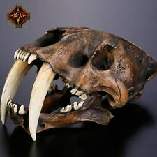 Replica Smilodon Saber Tooth Sabertooth Tiger 1:1 Skull Black Fossil Model Decor