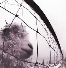 PEARL JAM Vs 180gm Vinyl LP 2016 (12 Tracks) Remastered Gatefold NEW & SEALED