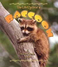 The Life Cycle of a Raccoon