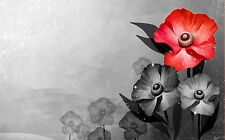 Framed Print - Black & White Poppies One with Red Flower (Picture Poster Poppy)