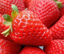 Red Strawberry Seeds Nutritious Delicious Fruits Seed Strawberries 100PCs Garden