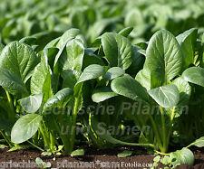 Griechischer Spinat 100 semi freschi Verdura invernale verdure sane