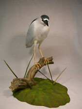 LifeSize Black-crowned Night Heron Orig Carving/Birdhug