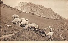 B76594 Czech Slovakia With the Sheeps in Mountains Printed Brno Brunn