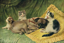 Vintage Pug Dog & Kittens NICE ART DRAWING 1912 - LARGE New Blank Note Cards