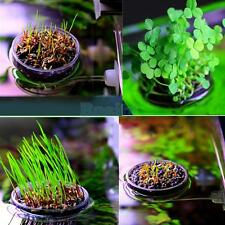 Aquarium Fish Tank Live Plant Pot Bowl Holder w/Sucker + Needle Leaf Seeds