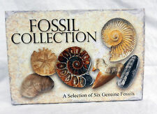 Fossil Collection Gift Box - Six Genuine Fossils - Lovely Selection - BNIB
