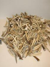 1 Pound of Deer Antler Tips Tines Crafts #1 Grade 3-4""