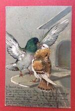 CPA. 1904. Couple de PIGEONS Amoureux. Volière. Gaufrée. Embossed.