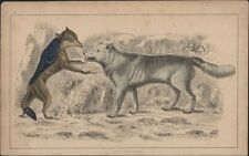1830 Goldsmith Antique Print of a Cape Jackal and The American Grey Wolf