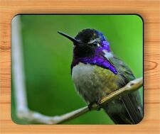 BIRD HUMMINGBIRD PAUSE TIME ON TREE BRANCH MOUSE PAD -kgg5Z