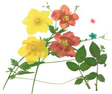 pressed flowers, daffodils, bridal wreath, rose leaves, foliage for art craft