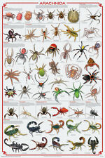 SPIDER Laminated POSTER SCORPION MITE TICK  ARACHNIDS EDUCATIONAL CHART NEW