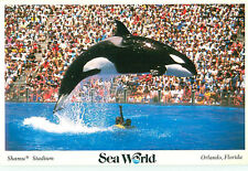 Vintage Postcard Sea World Shamu Stadium Orlando Florida   # 1637