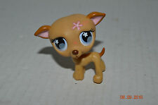 Littlest Pet Shop~#498~Greyhound Puppy Dog Tan White~Purple Flower Eyes