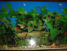 Aquarium Background for Fish Tank 40 x100 cm poster