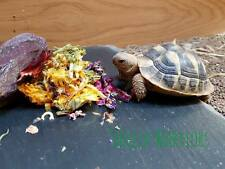 Shelled Warriors Tortoise Flower Mix- Ready to feed 50g