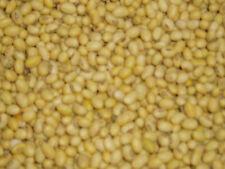 5 kg Sojabohnen Sojamilch Tofu Sojasprossen angbaut in Bayern letzte Ernte TOP
