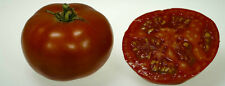 70 Graines de TOMATE CAROTTE TOP HATIVE