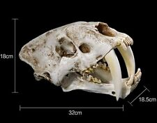 Sabertooth Replica Skull Collectible Collectors Gift